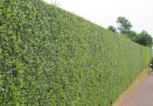 hedge-cutting-maintenance-streatham